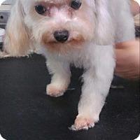 Adopt A Pet :: Peaches - Fort Lauderdale, FL