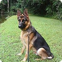 Adopt A Pet :: Logan - Knoxville, TN