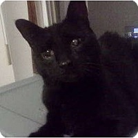 Adopt A Pet :: Ipod (MG) - Little Falls, NJ
