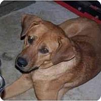 Adopt A Pet :: Ranger - Cuddebackville, NY