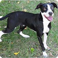 Adopt A Pet :: Sprite - Chicago, IL