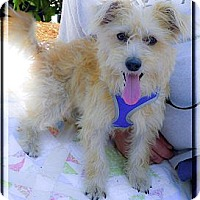 Adopt A Pet :: Sandy ADOPTION PENDING - Sacramento, CA