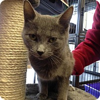 Adopt A Pet :: Caberet - Hamilton, ON