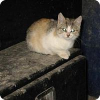 Adopt A Pet :: Mango - Hamilton, ON