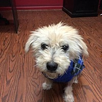 Terrier (Unknown Type, Medium)/Chinese Crested Mix Dog for adoption in Spartanburg, South Carolina - Alfie