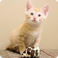 Adopt A Pet :: Pete - Chicago, IL