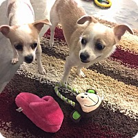 Adopt A Pet :: Norrie/Pippey - Hillsboro, IL