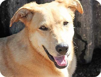 Labrador Retriever Mix Dog for adoption in Jewett City, Connecticut - Spree