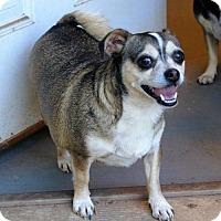 Adopt A Pet :: Badger - Evans, GA