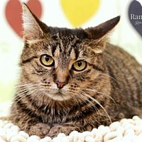 Adopt A Pet :: Candy - Sterling Heights, MI