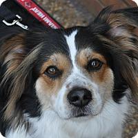 Adopt A Pet :: Jeffrey - Atlanta, GA