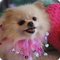 Adopt A Pet :: Josephine - Benton, LA
