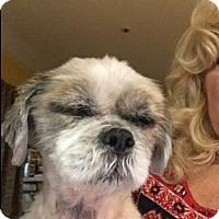 Adopt A Pet :: Teddy - Rancho Cucamonga, CA