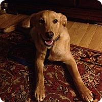 Adopt A Pet :: Margo - Purcellville, VA