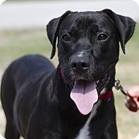 Adopt A Pet :: Jake - Greenwood, SC