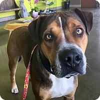Adopt A Pet :: ODIN - Los Angeles, CA