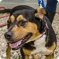 Adopt A Pet :: Case - Middlebury, CT