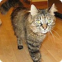 Adopt A Pet :: Egypt - Chicago, IL