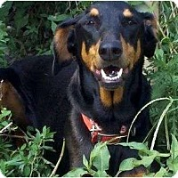 Adopt A Pet :: Carly--adopted!! - New Richmond, OH
