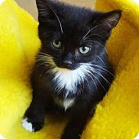 Adopt A Pet :: Whitnee - N. Billerica, MA
