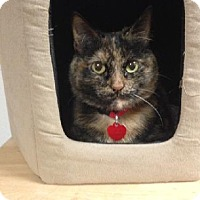 Domestic Mediumhair Cat for adoption in Los Angeles, California - Sabrina