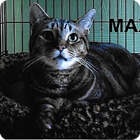 Adopt A Pet :: Max - Medway, MA