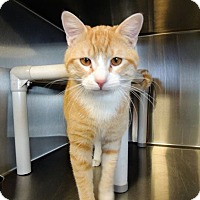 Adopt A Pet :: Nyla - Sullivan, MO