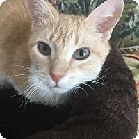 Adopt A Pet :: Eve - Toledo, OH