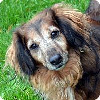 Adopt A Pet :: Lorri Ann - Bridgeton, MO