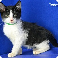 Adopt A Pet :: Teddy - Carencro, LA