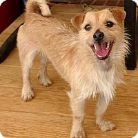 Adopt A Pet :: Jasper - Mount Mourne, NC