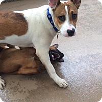 Adopt A Pet :: Killian - San Francisco, CA