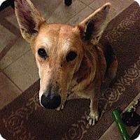 Adopt A Pet :: Tia - Kingwood, TX