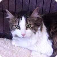 Adopt A Pet :: Isabell W - Sacramento, CA