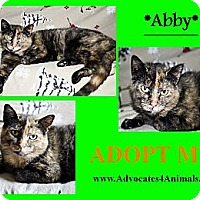 Adopt A Pet :: Abby - Xenia, OH