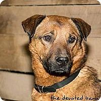Adopt A Pet :: Duke - Ortonville, MI