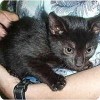 Adopt A Pet :: Jet - New Egypt, NJ
