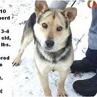 Adopt A Pet :: # 638-10  @ Animal Shelter - Zanesville, OH