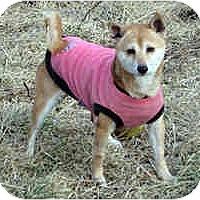 Adopt A Pet :: Hanna- MO - Round Lake, IL
