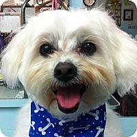 Adopt A Pet :: Rocco - La Costa, CA