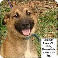 Adopt A Pet :: # 783-08 - RESCUED! - Zanesville, OH