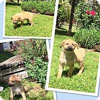 Adopt A Pet :: Alejandro - Scottsdale, AZ