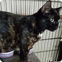 Adopt A Pet :: Havanna - McDonough, GA