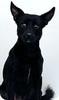 Chihuahua/Feist Mix Dog for adoption in Newland, North Carolina - Dolly