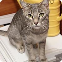 Adopt A Pet :: Violet - Dallas, TX