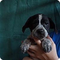 Adopt A Pet :: Shiloh - Oviedo, FL