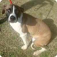 Adopt A Pet :: Brodsky - Newport, NC