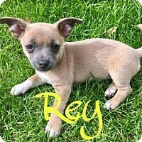 Adopt A Pet :: Rey - Tempe, AZ