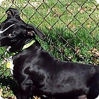 Adopt A Pet :: CHARLIE BROWN - Pennsville, NJ
