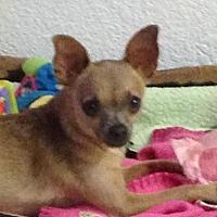 Adopt A Pet :: Chica - Modesto, CA